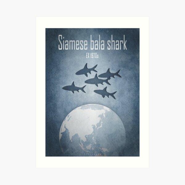 Siamese bala shark - extinct animals Art Print