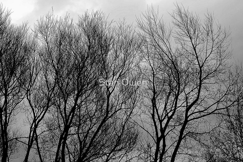 Winter Tree's & Winter Sky by Stan Owen
