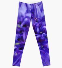 Cornflower Blue Bachelor Button Flower Leggings
