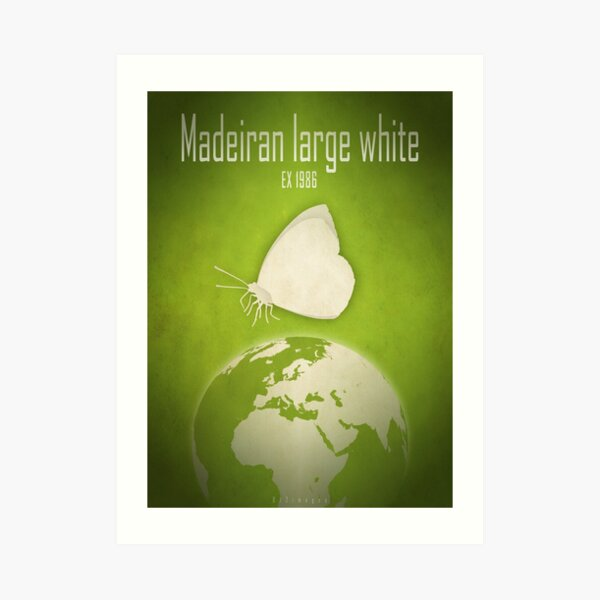 Madeiran large white butterfly - extinct animals Art Print