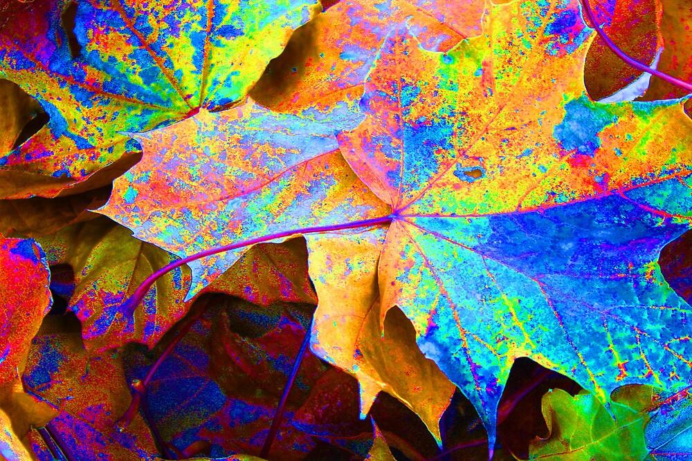 Leaves of Color  by Sharon Hagler