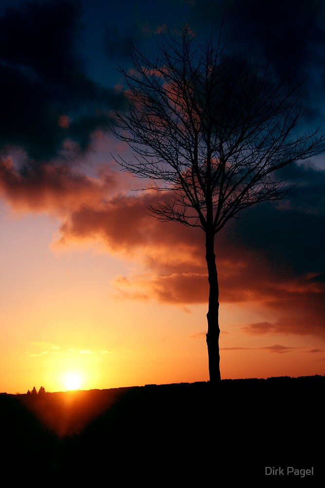 Sunset tree by Dirk Pagel