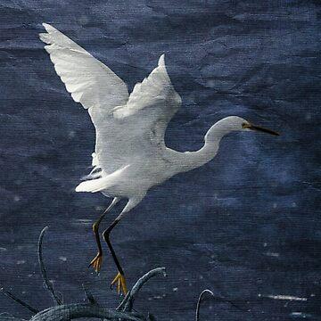 Egret Blues by CarolM