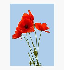 Delicate Red Poppies Vector Photographic Print