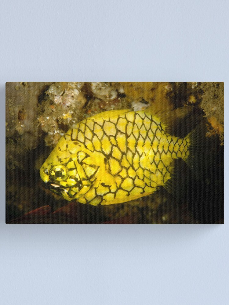 Alternate view of Pineapplefish Canvas Print