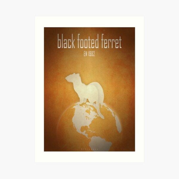 Black-footed ferret - endangered species Art Print