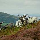 Feral Goats by Kat Simmons
