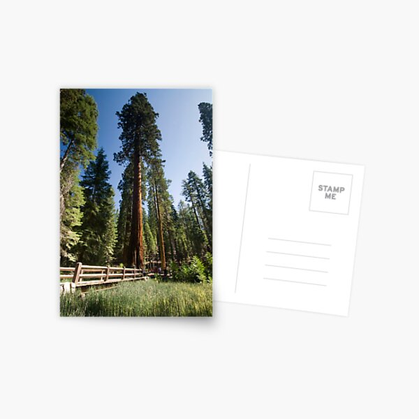 Mariposa Grove Postcard