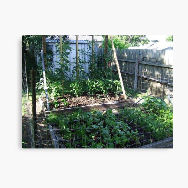 My Vegetable garden Canvas Print