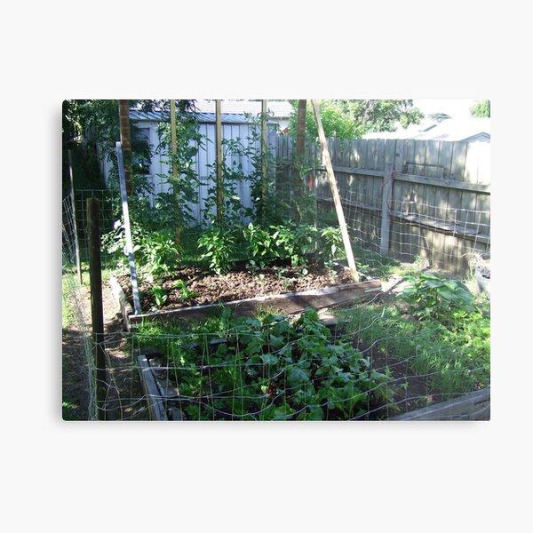 My Vegetable garden Metal Print