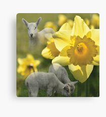 Spring! Lambs and Daffs Canvas Print