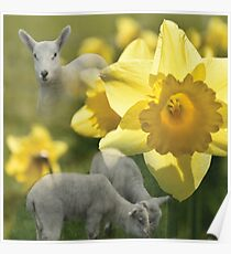 Spring! Lambs and Daffs Poster