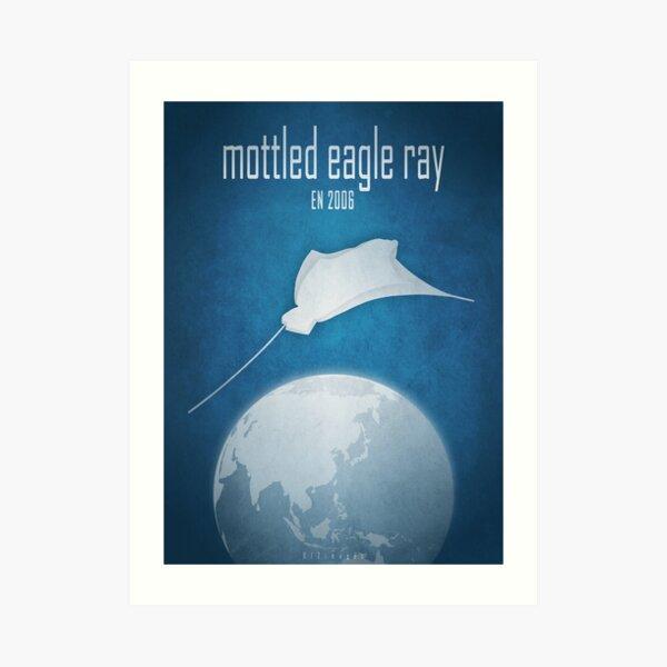Mottled eagle ray - endangered species Art Print