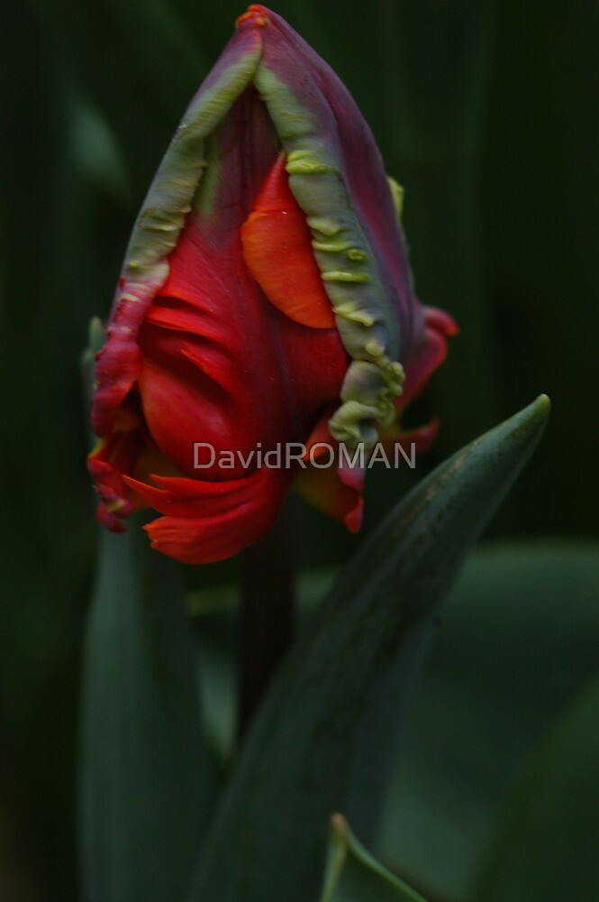 Comforting you by DavidROMAN