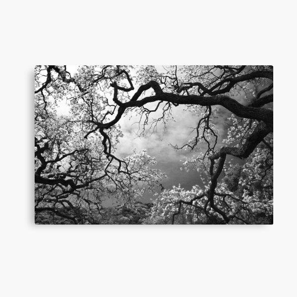 Sheltering Sky Canvas Print