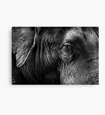The Old Elephant Canvas Print