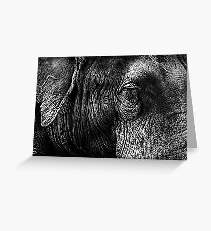 The Old Elephant Greeting Card