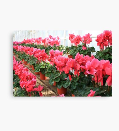 Rows and Rows of Flowers Canvas Print