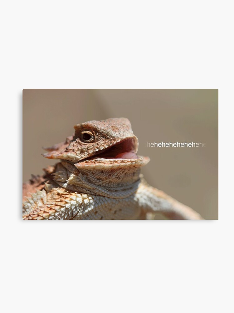 Laughing Lizard Meme Metal Print By Flashmanbiscuit Redbubble