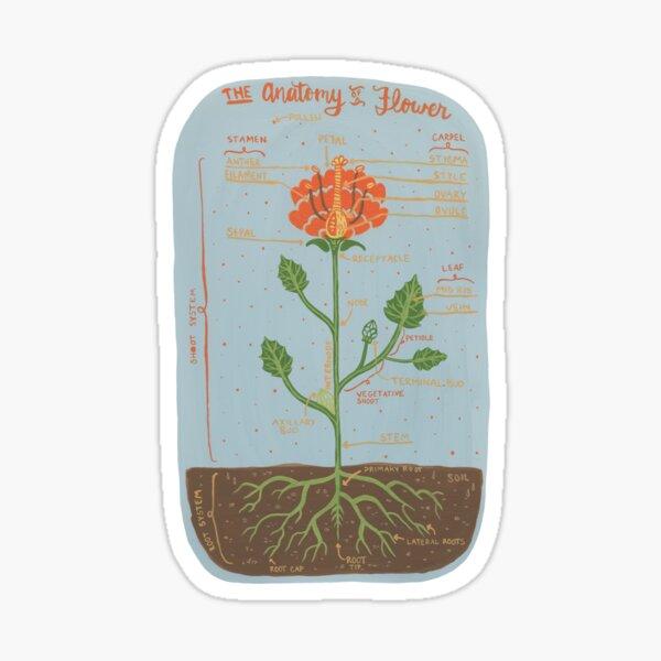 Anatomy of a Flower Sticker
