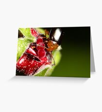 Hibiscus Beetle eating Greeting Card