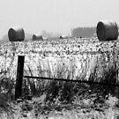 Winter Bales of Hay by Brian Gaynor
