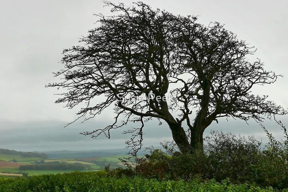 View from Pilsdon pen ~ Dorset by Susie Peek