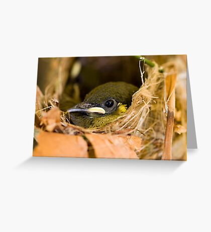 Ready to Fly - honey eater chick Greeting Card