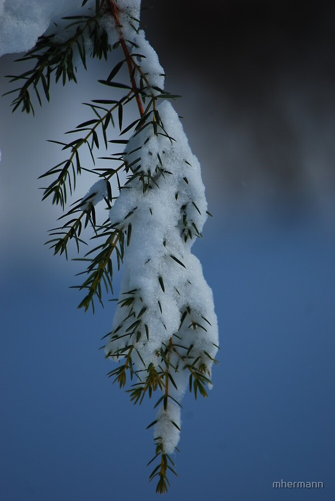 Pine Snow by mhermann