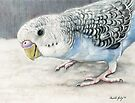 Blue Budgie Parakeet by Charlotte Yealey