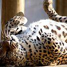 leopard 5 by nakomis