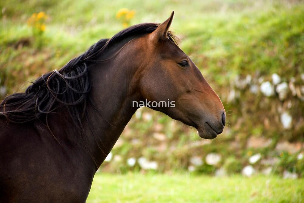 horse 1 by nakomis