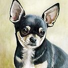 Chihuahua by Charlotte Yealey