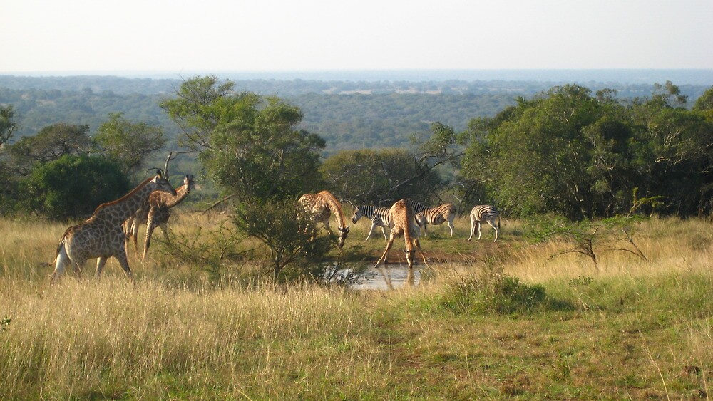 The Watering Hole - Africa by Ginelle Cooke
