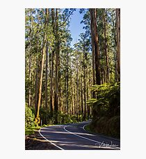 Black Spur Drive, Yarra Valley, Victoria, Australia. Photographic Print