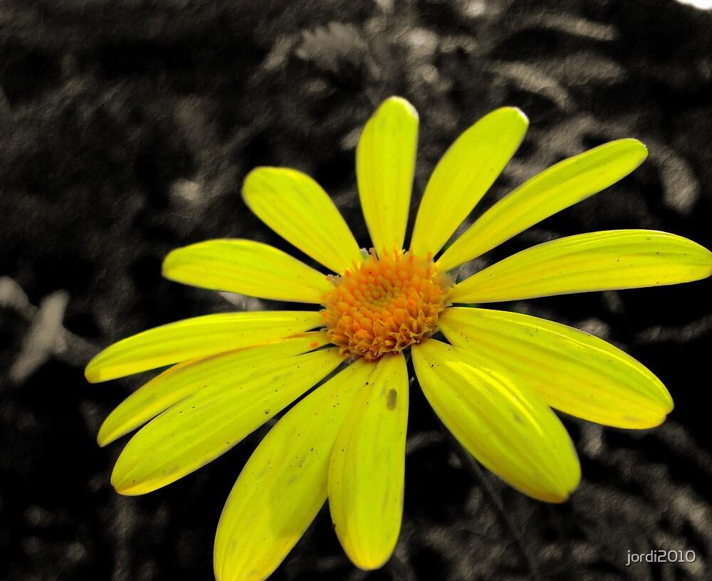 Tis A Flower. by jordi2010