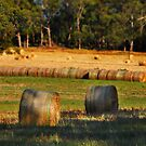 Hay Bales by Peter Hammer