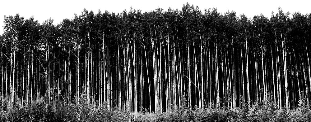 Tree line by Michael Quiros
