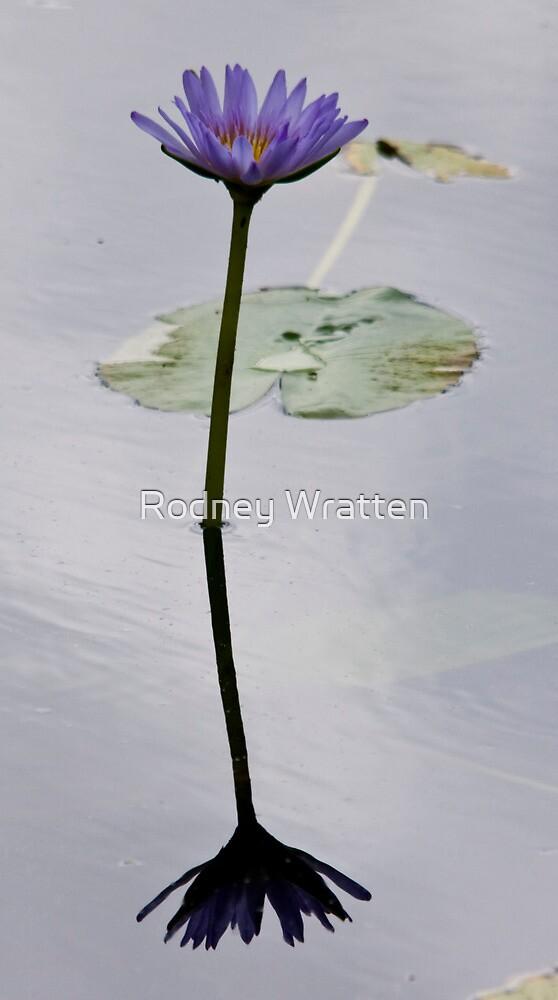Lily Pond by Rodney Wratten