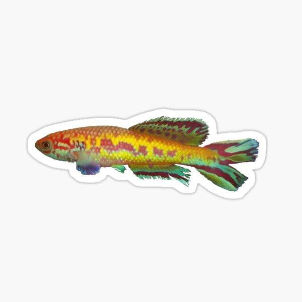 Callopanchax occidentalis killifish Sticker