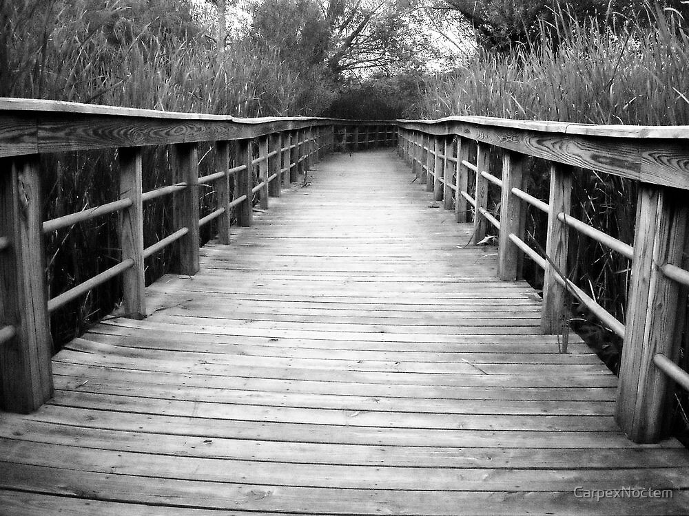 Oxbow Park Reed Walkway by CarpexNoctem