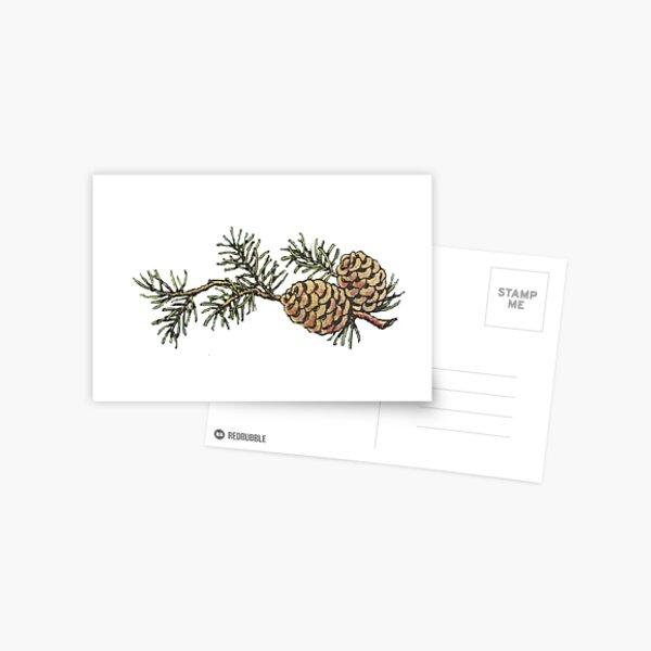 Vintage Pinecones and Pine Needles - Christmas Postcard