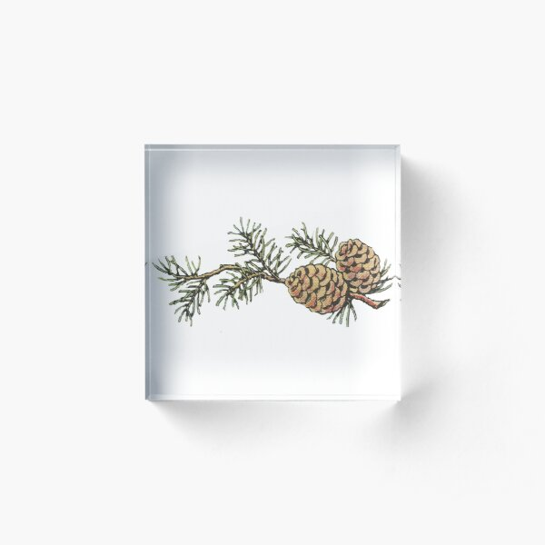 Vintage Pinecones and Pine Needles - Christmas Acrylic Block