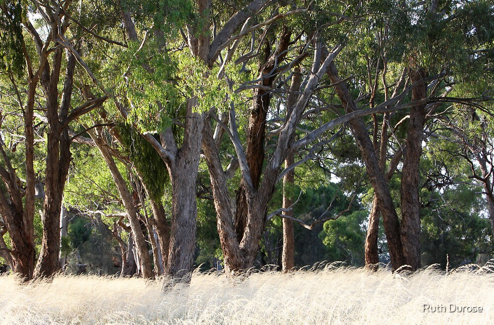Taking a moment on the side of the road, Western Highway, Victoria by Ruth Durose