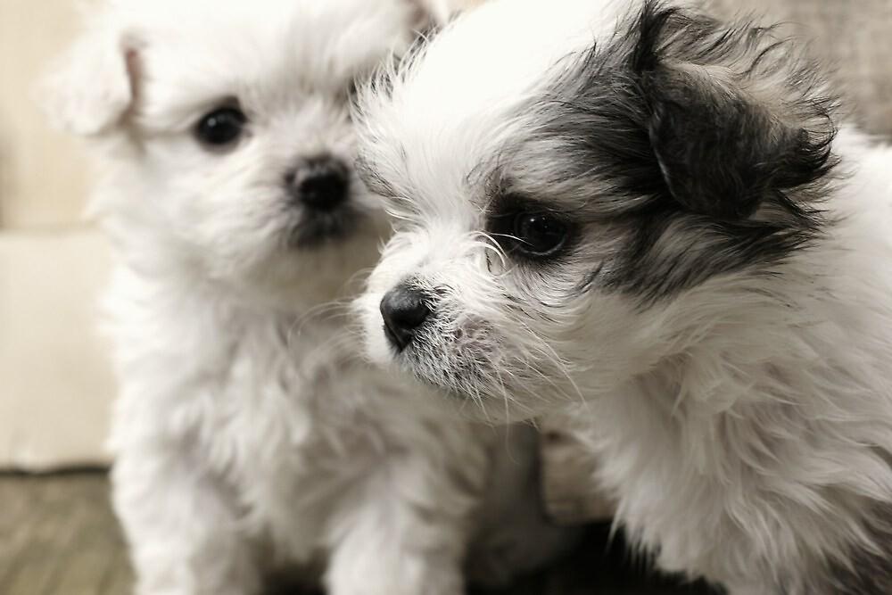 Cute Puppy Portrait by Adam Jones