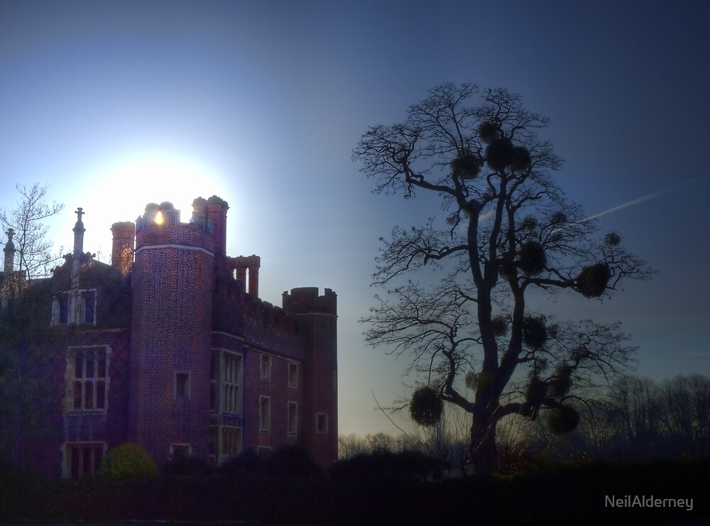 A tree in the grounds of Hampton Court Palace by NeilAlderney