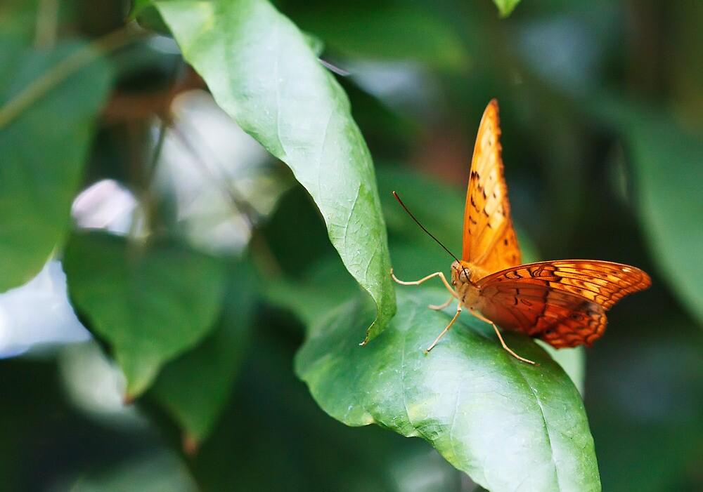 Orange Butterfly by Andrew Widdowson