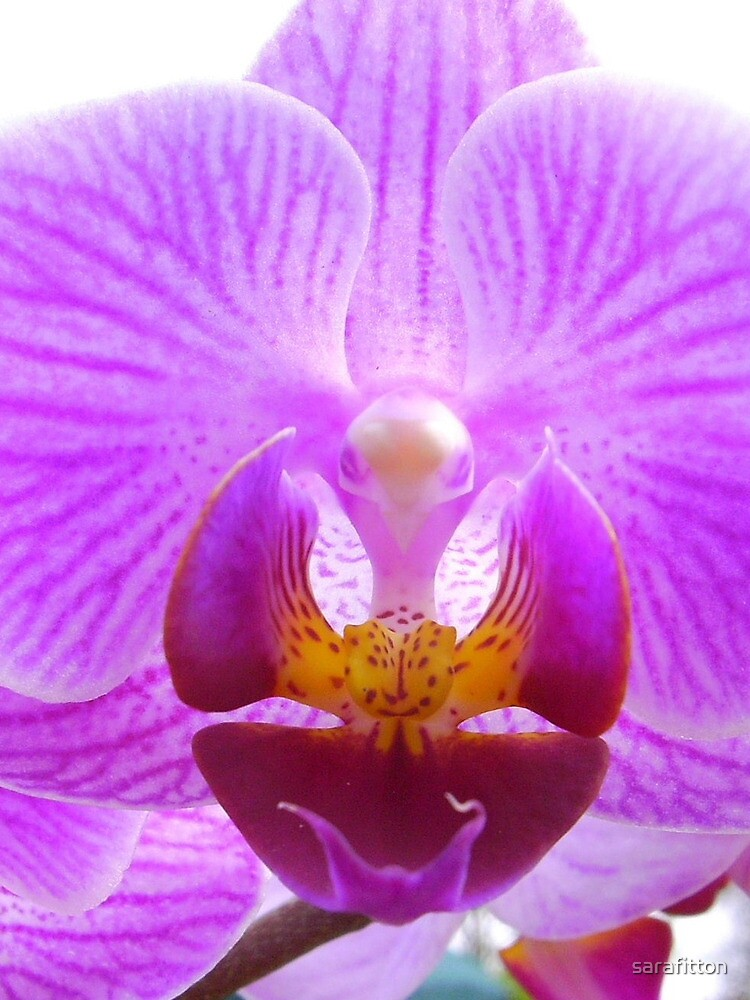 Purple Orchid by sarafitton