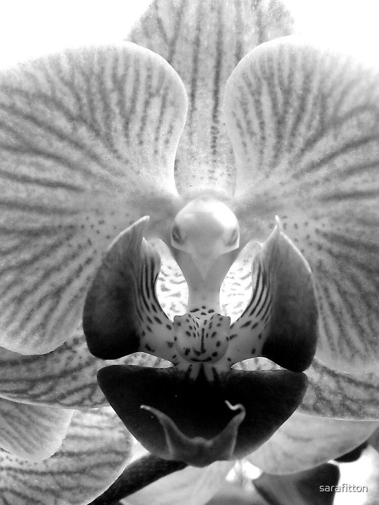Orchid monochrome by sarafitton