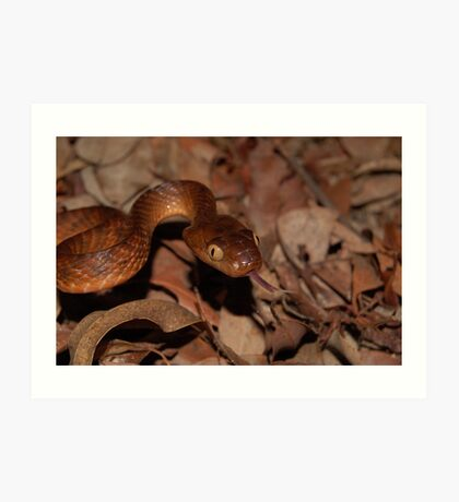 Brown Tree Snake Art Print